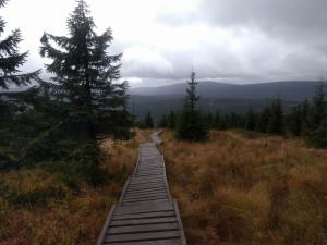 A w Czechach tak sobie radzą z podmokłym terenem na szlakach.